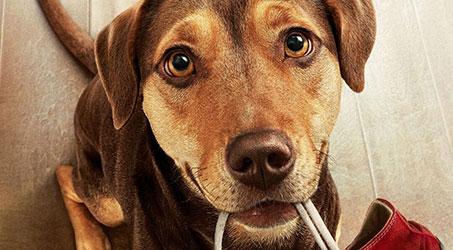 """Những thú vui cưng muốn xỉu của chú cún Bella trong """"Đường về nhà của cún con"""""""